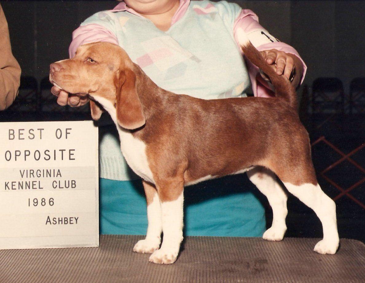 Chocolate Tri Beagle Beagle Colors Beagle Dogs Hugging