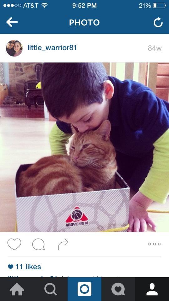 Adilen Figueroa Ct Lost Pets November 13 Https Www Facebook Com Ct Lost Pets Posts 783440035111207 Missing Orange C Losing A Pet Lost Cat Cats