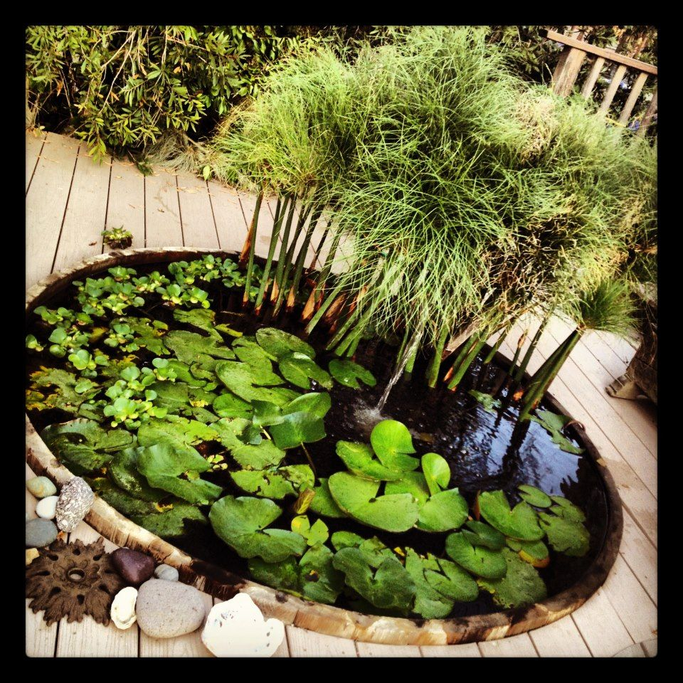 Cedar hot tub turned koi pond reuse recycle repurpose for Koi pond tubs