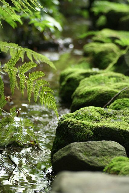 I Think I Can Smell The Cool Greenness In The Air With Images Moss Garden Zen Garden Beautiful Nature