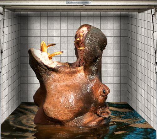 Garagentor design aufkleber  Fotoplane für Garagentor Nilpferd / Garage Mural Hippo | Tiere ...