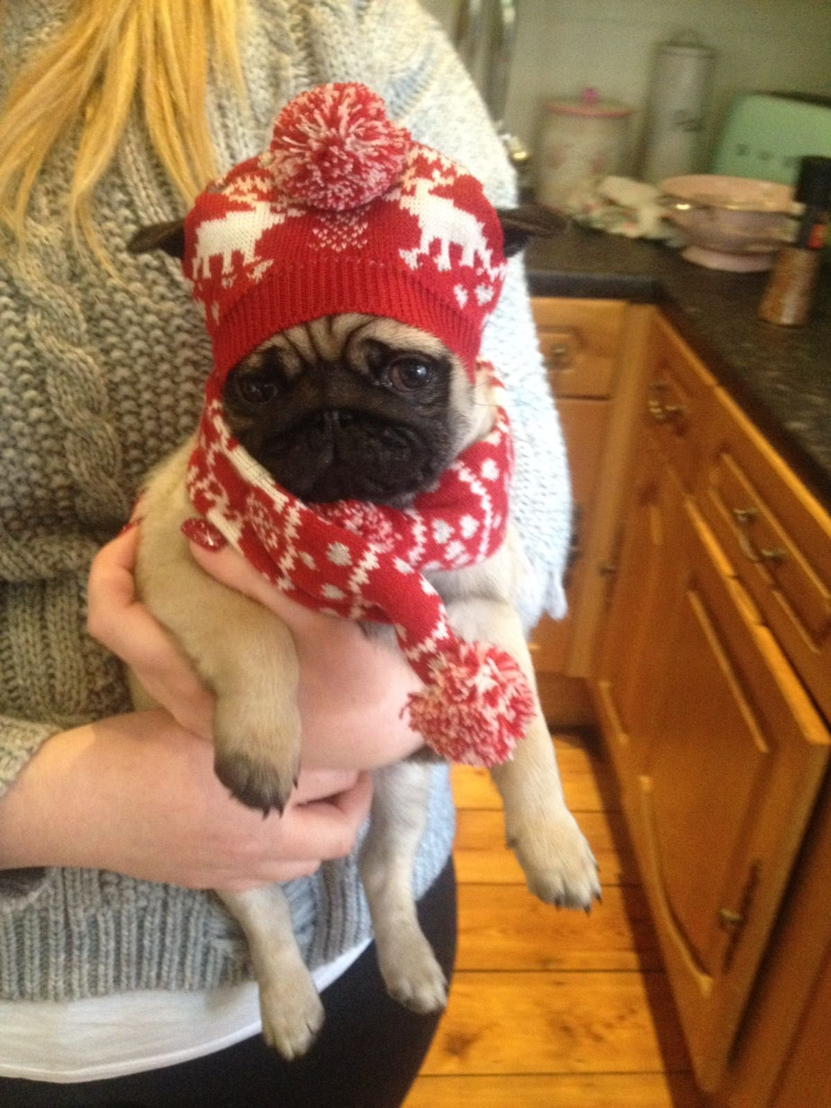 8c6a1f814ca Captain the pug puppy Christmas 2016 surprise dress up hat scarf ...