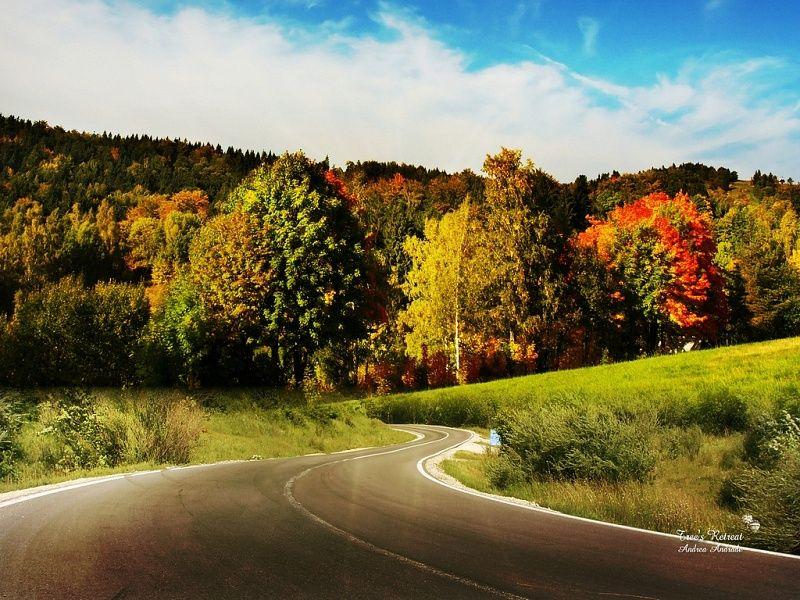 colour trees Beautiful landscape pictures, Beautiful