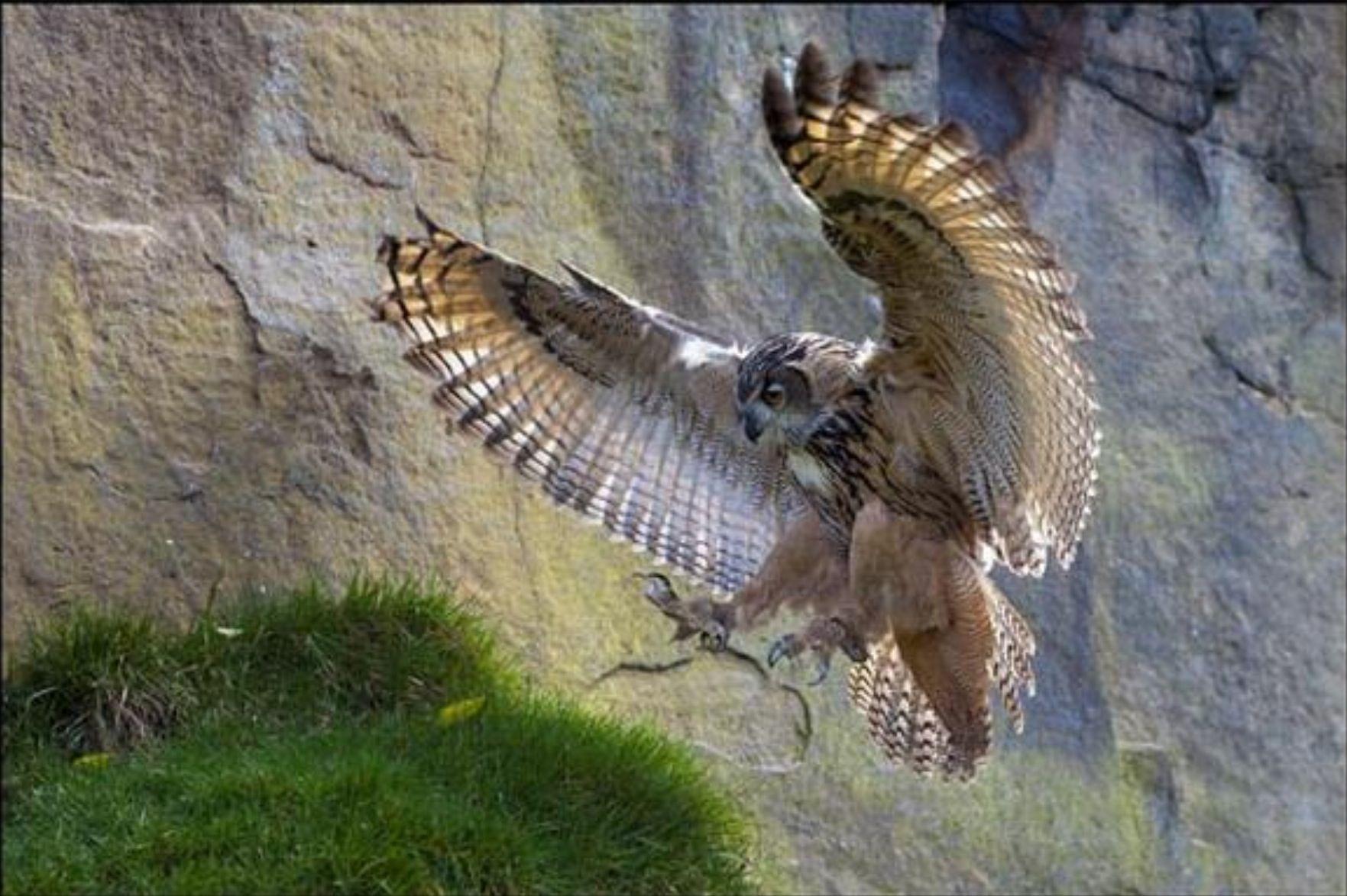 Beautiful. | Owl, Eagle, Barn owl