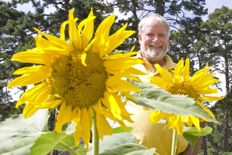 Jeri Rowe: 'Johnny Sunflower Seed' is planter, rambler and traveler