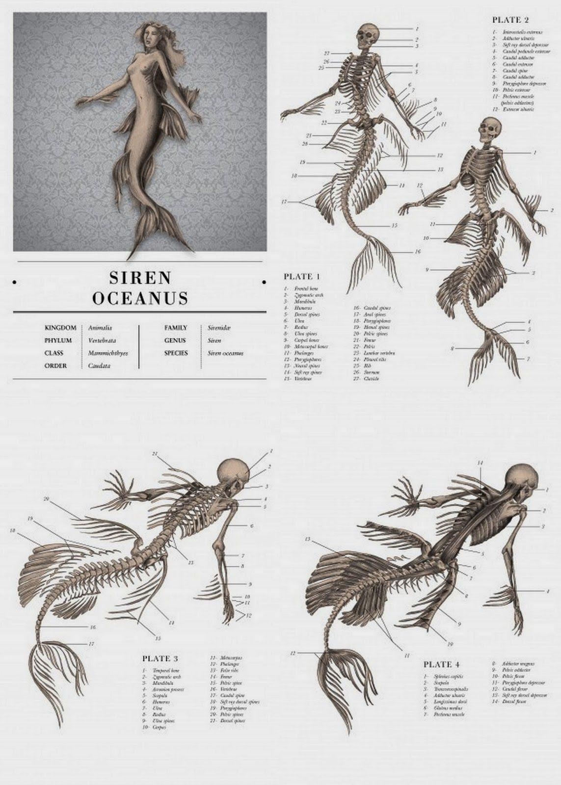 drawing art female draw underwater fish Anatomy creature tail ...