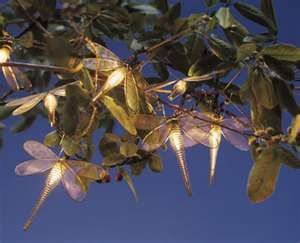 Dragonfly outdoor lights products i love pinterest dragonfly outdoor lights mozeypictures Gallery