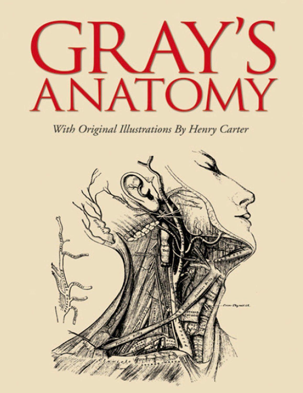89 grays anatomy coloring book pdf anatomy coloring book mccann eric ...