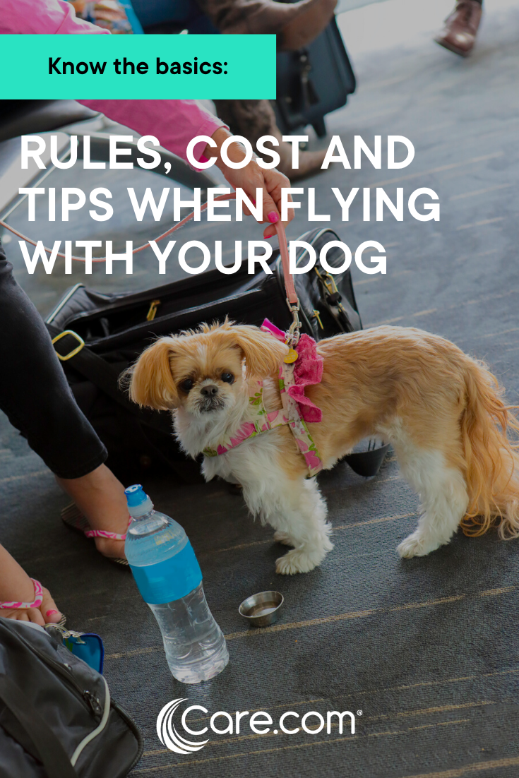 Flying With Dogs 101 General Rules Cost And Travel Tips In 2020 Dogs Dog Care Flying Dog