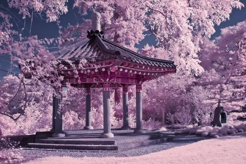chinesischen japan koreanisch kirschblüten garten high quality and, Garten Ideen