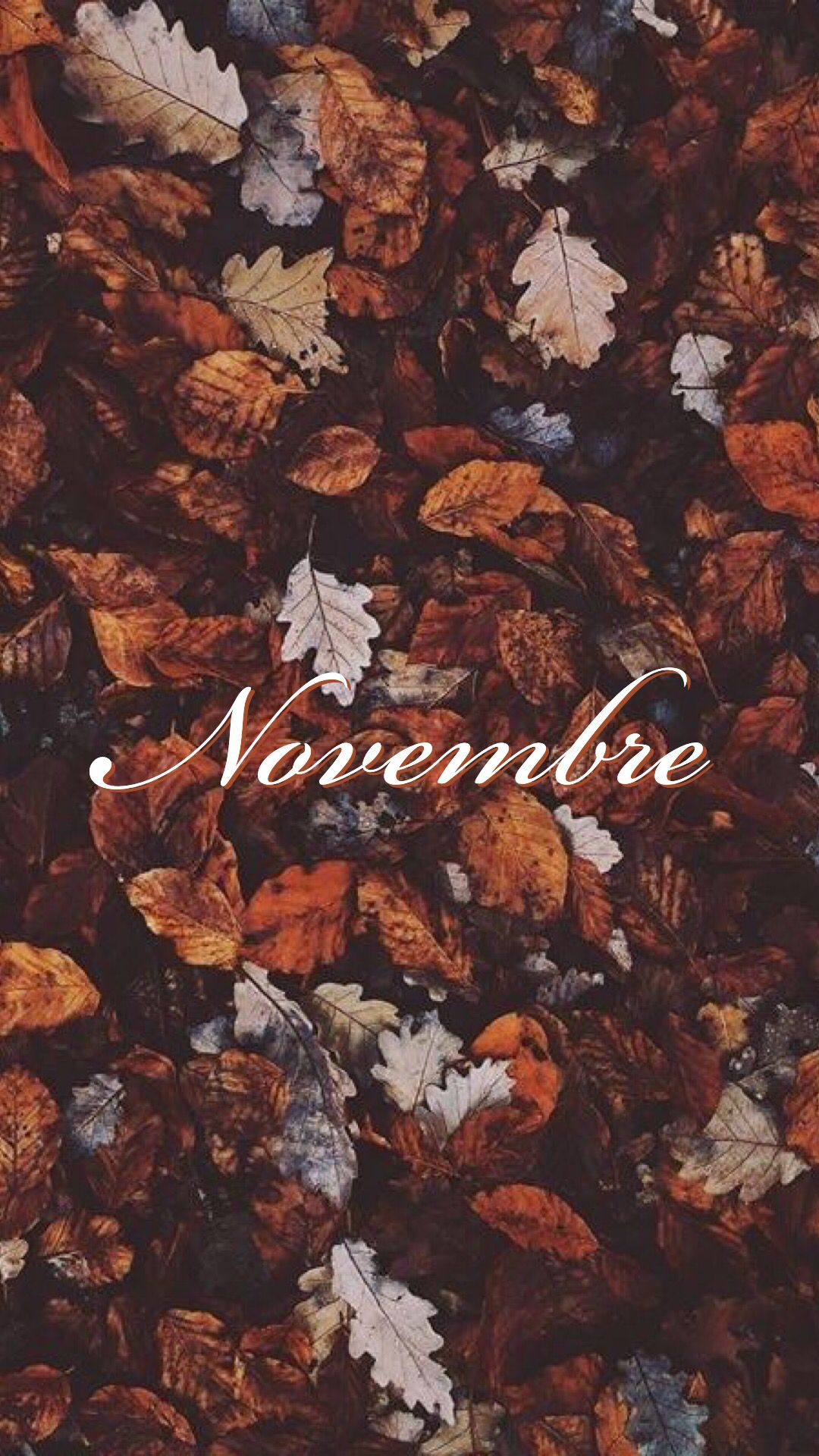 Novembre Sfondo Autumn Leaves Wallpaper Cute Fall Wallpaper November Wallpaper