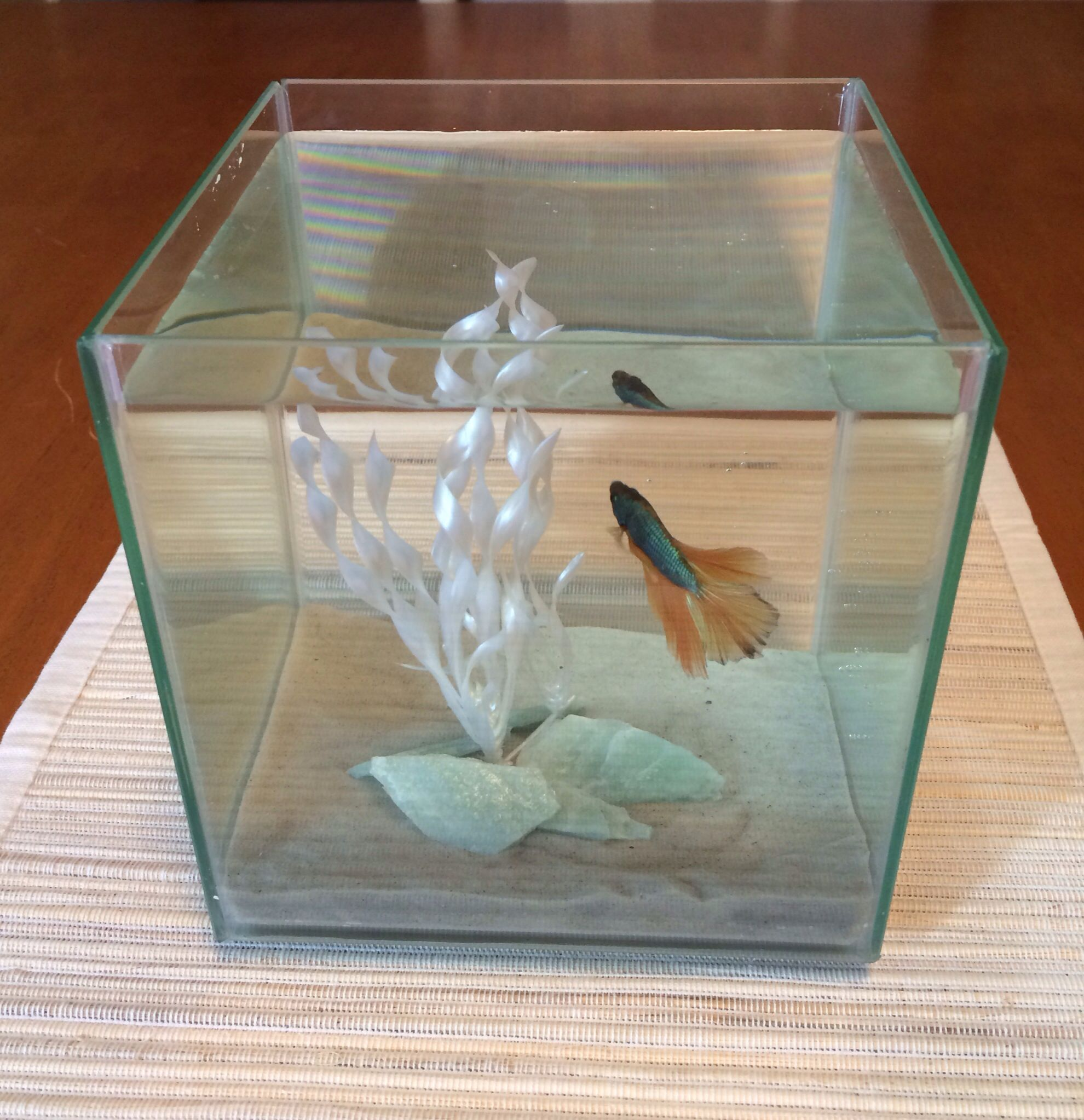How To Decorate Fish Bowl: Awesome Thanksgiving Table Centerpiece Idea...1/2 Gallon