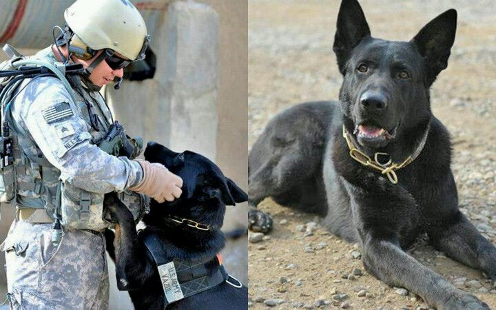 Mwd Vazul Would Be A Fine Match For My Ripley Why Don T They