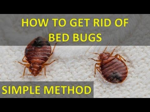 How To Get Bugs Out Of Your Room At Night