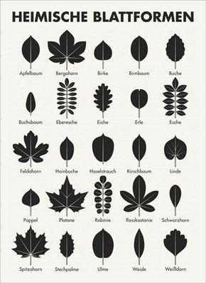 infografik zum bestimmen der blattformen also der bl tter von b umen wie apfelbaum bergahorn. Black Bedroom Furniture Sets. Home Design Ideas