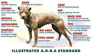Adba Standard Pit With Images American Pitbull Terrier