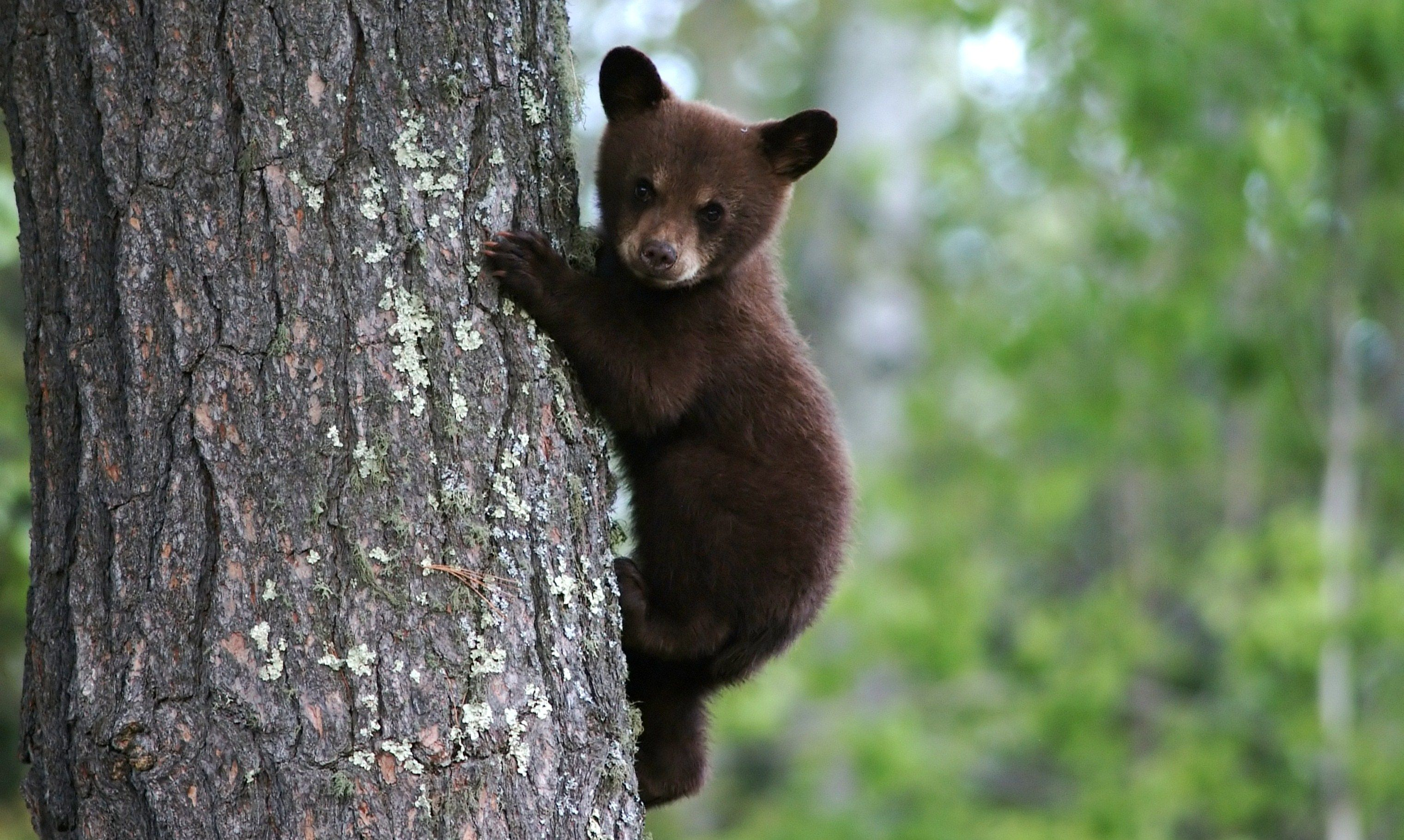 19++ Animals that live in the woods images