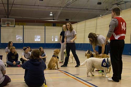 Augustana Newsletter Article On Viking Pups New Tla And General