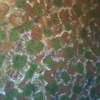 Camo Sponge Painted Sponge Painting Kids Room Painting