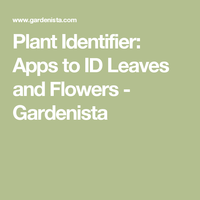 Plant Identifier Apps to ID Leaves and Flowers