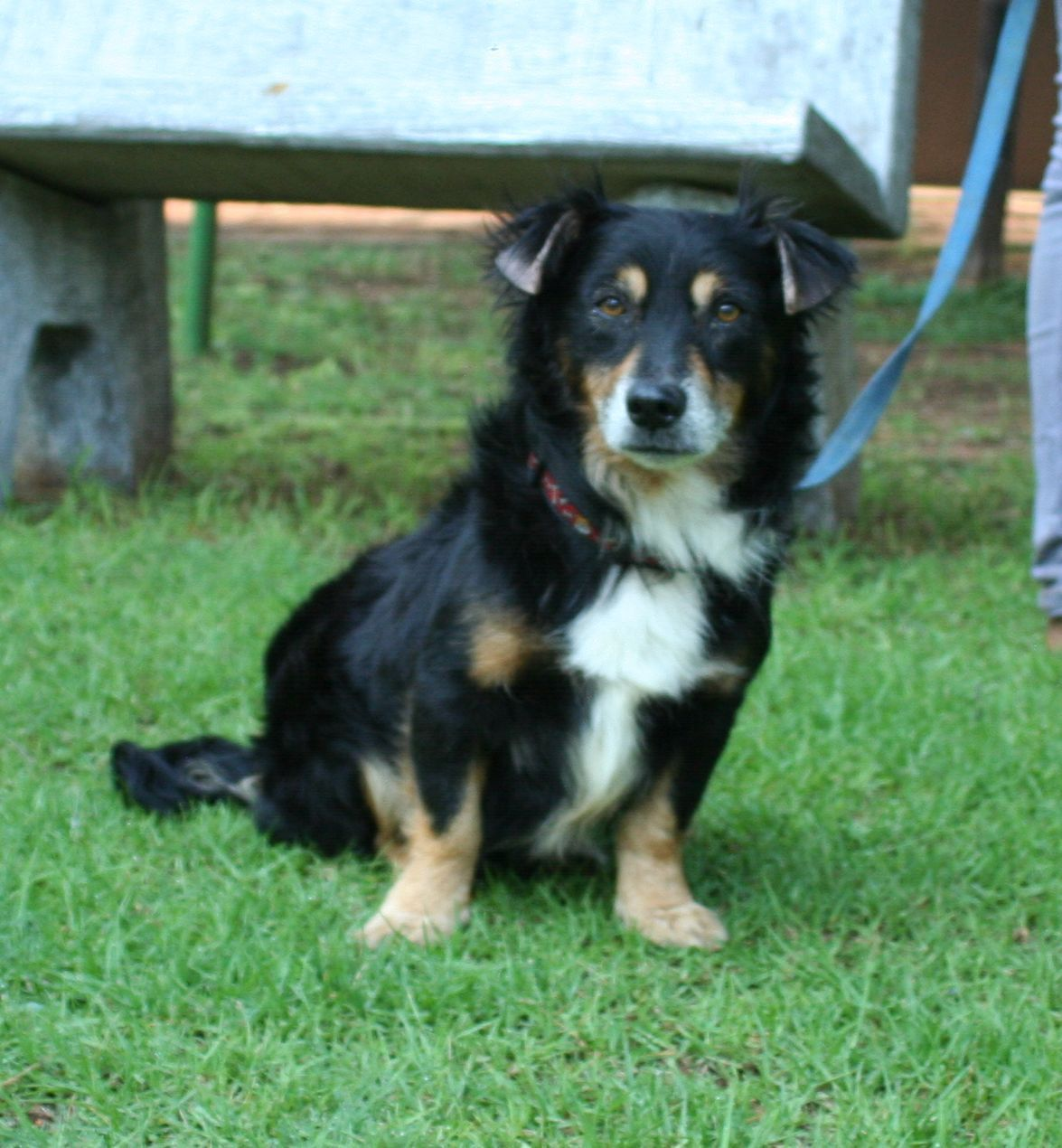 Jasper Pets Rescue Dogs Dogs