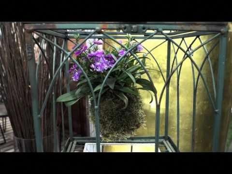 kokedama com orquidea - YouTube #Kokedamascolgantes