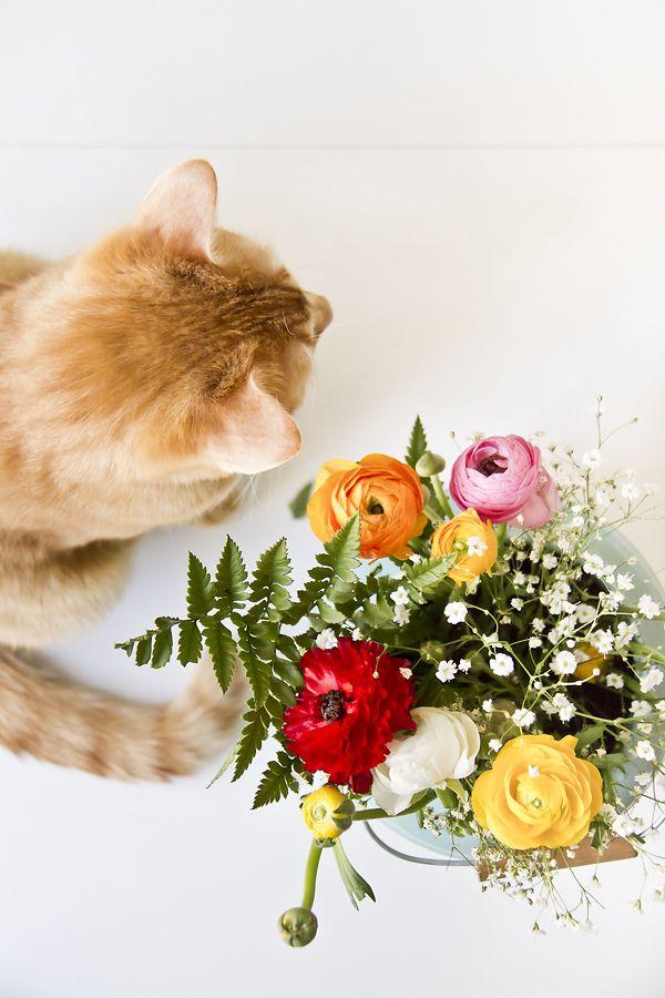 La gatta col piatto che scotta   ~♡~Spring Home~♡~   Pinterest ...