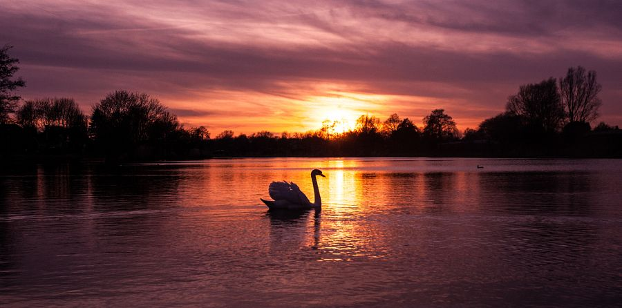 Image result for cob swan sunset