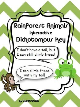 rainforest dichotomous key teacher ideas pinterest science