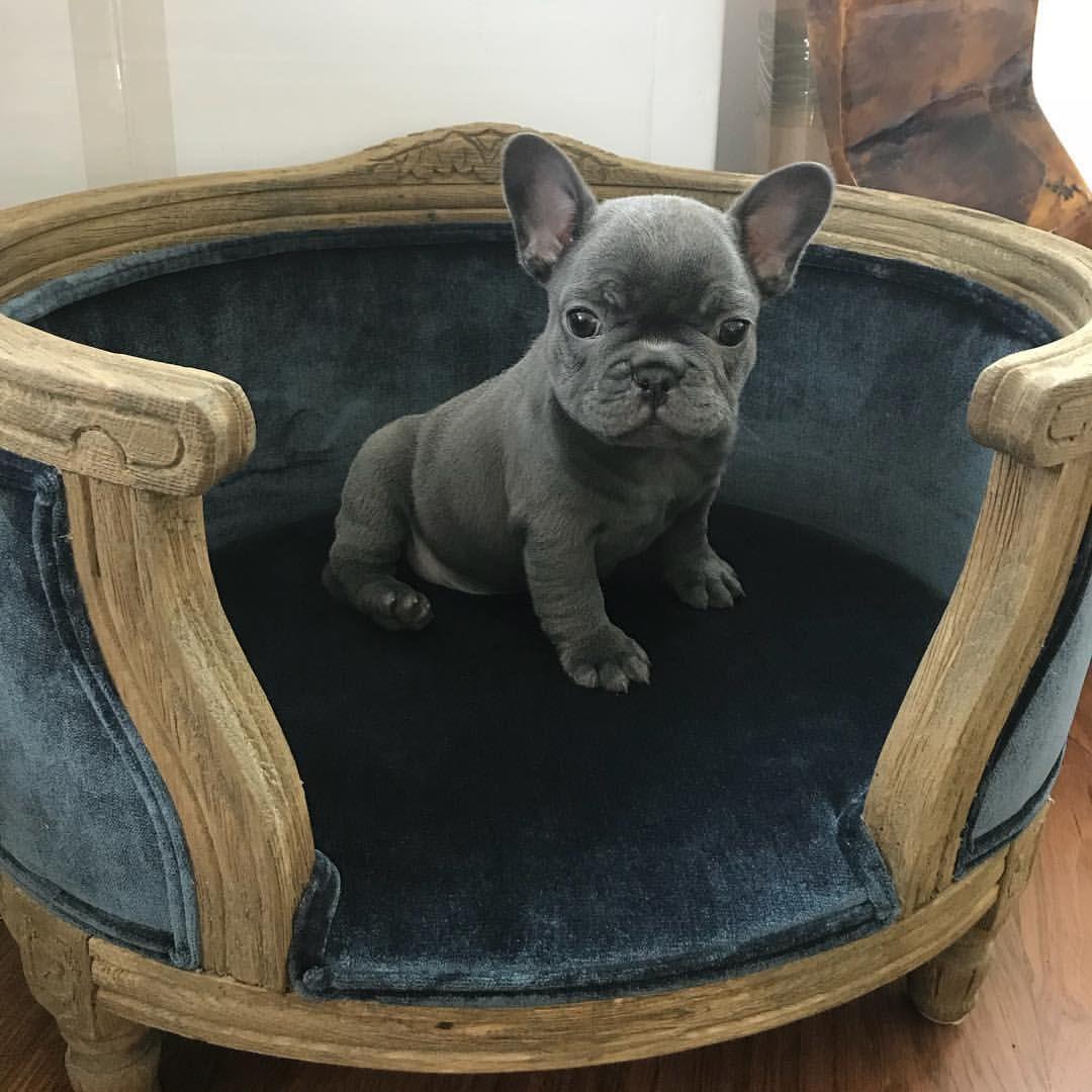 Taraji Henson S New Pup Her Instagram Post Tarajiphenson