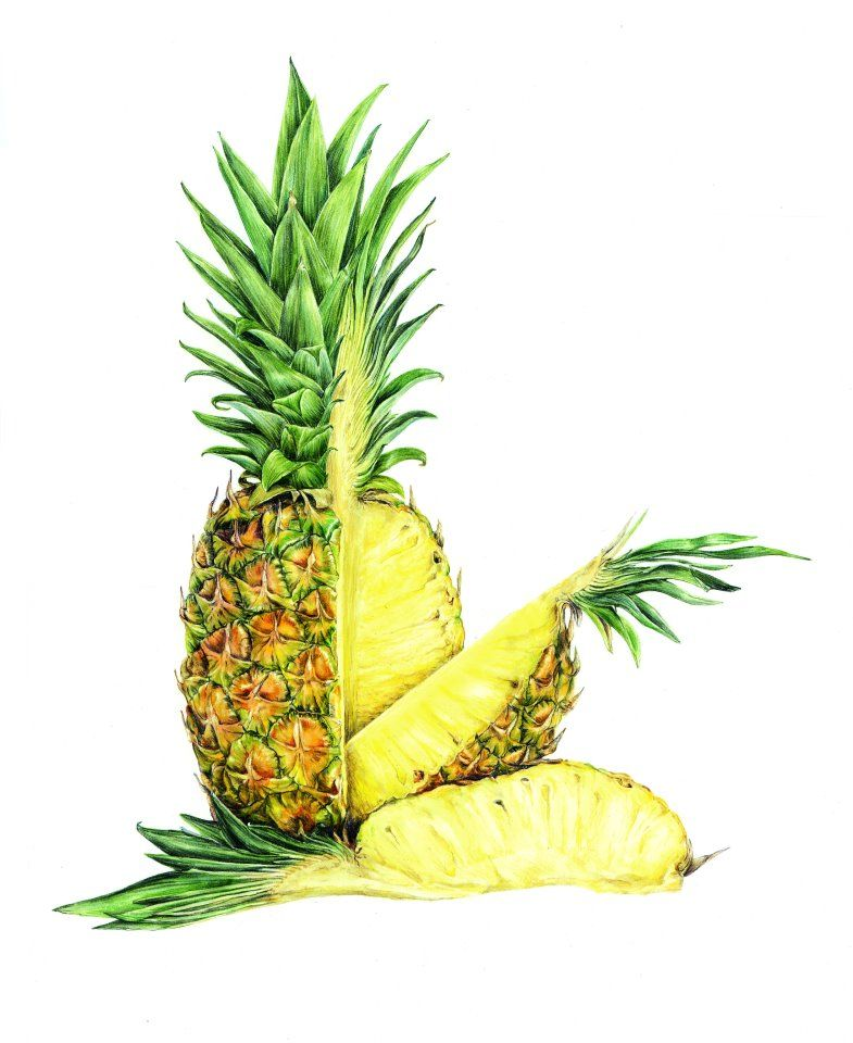 Coloured pencil drawing of a Pineapple cut open | Drawing ...