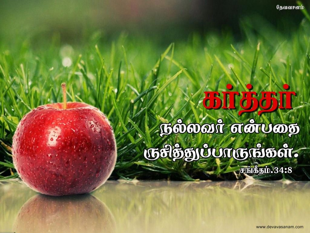 Download Hd Christmas New Year 2018 Bible Verse Greetings Card Wallpapers Free Tamil Bible Verse Desktop Wallpapers Download Yatesgardeningtips