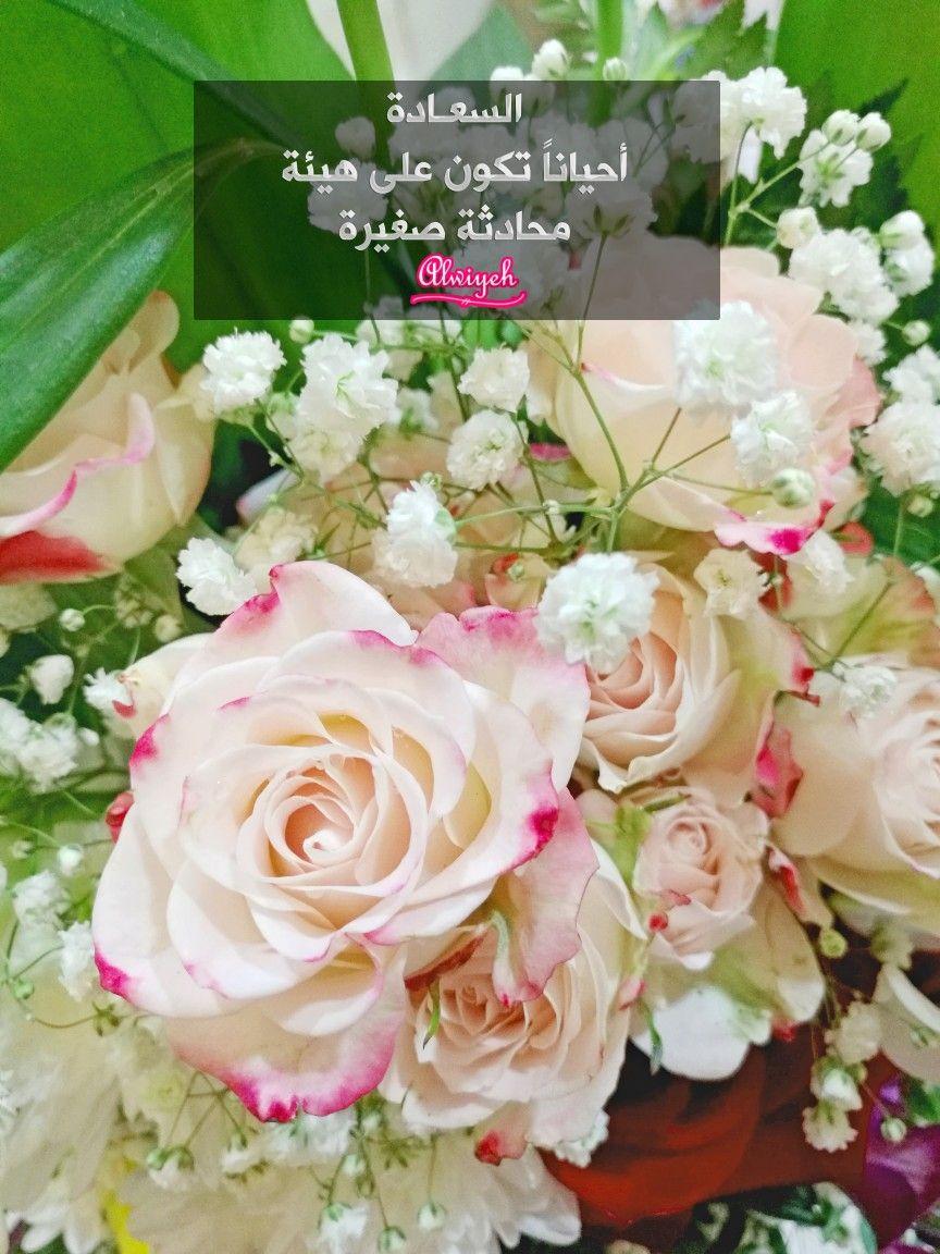 السعادة أحيانا تكون على هيئة محادثة صغيرة Flowers Plants Rose
