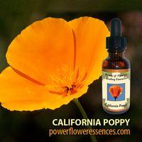 Image California Poppy Flower Essence