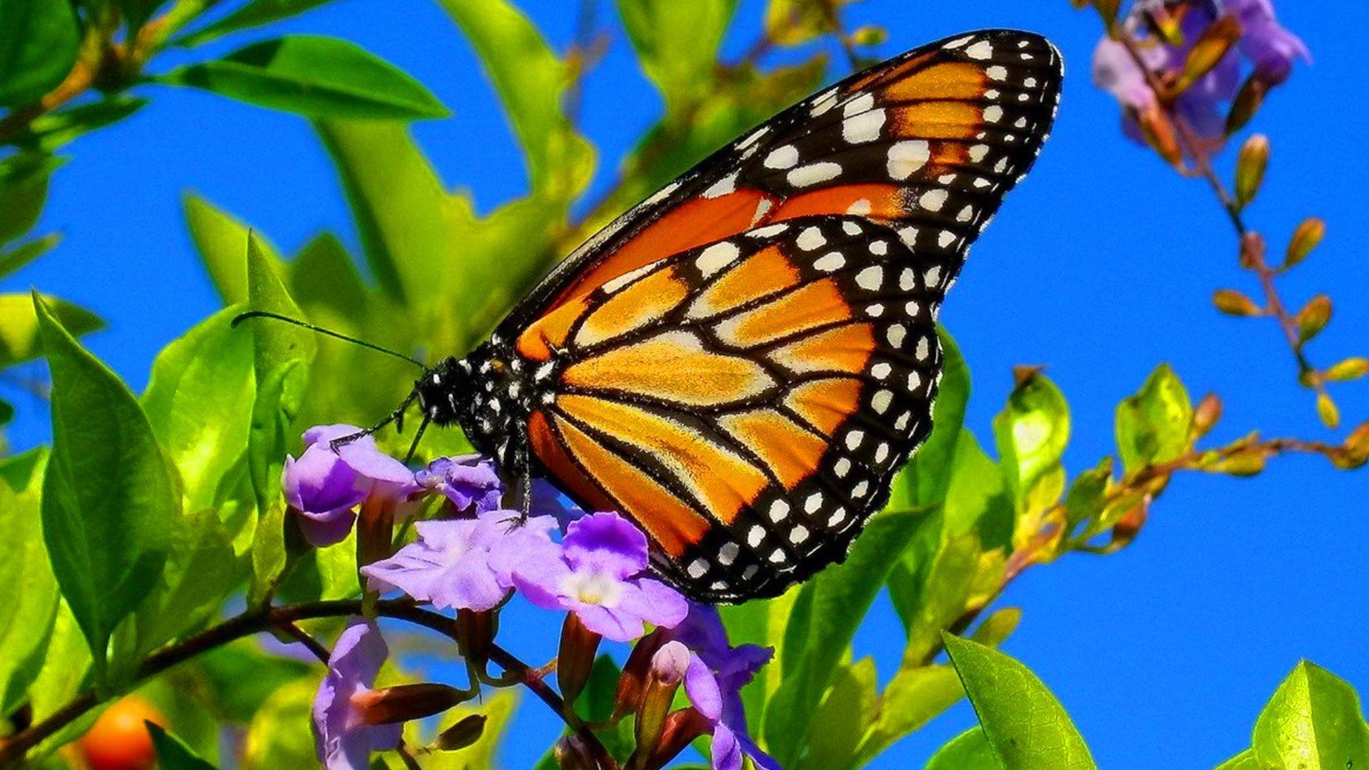 Beautiful Butterflies The Best Relaxing Piano Sleep Relaxing Music 2 Hours Hd 1080p Beautiful Butterflies Relaxing Music Butterflies Flying