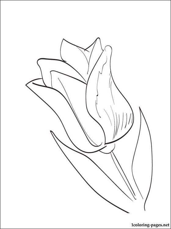 Tulips A Beautiful Picture Coloring Coloring Pages