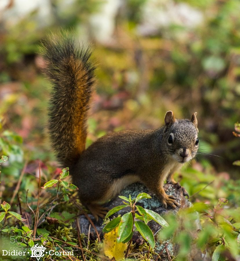 Je T Ai Vu By Didiervar83 Animals Pets Squirrel