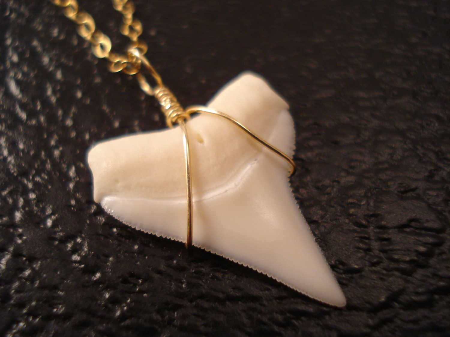 Genuine shark tooth necklace gold shark tooth jewelry real shark genuine shark tooth necklace gold shark tooth jewelry real shark tooth pendant delicate gold necklace real shark tooth necklace aloadofball Gallery