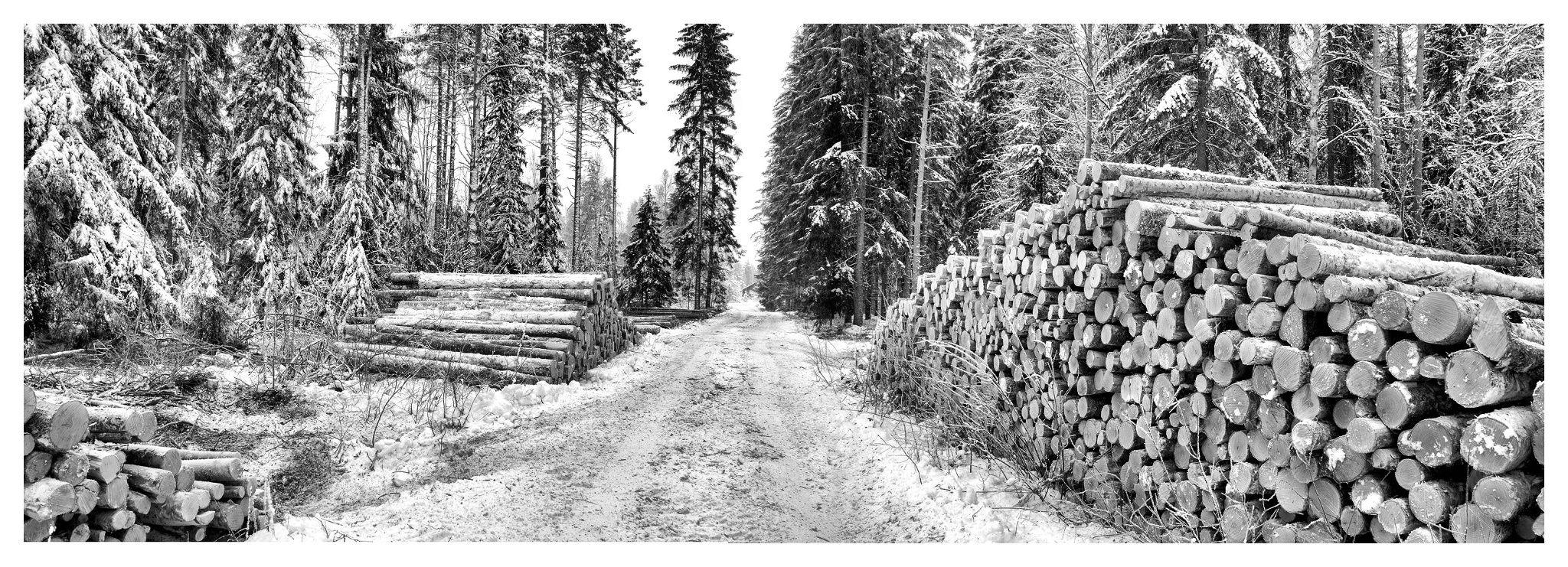 Wood Cutters Day by Pekka Ilari T. on 500px
