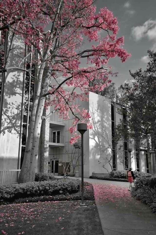 Fond D Ecran Gris Et Rose Sobre Black And White Picture Wall Black And White Photo Wall Photo Wall Collage