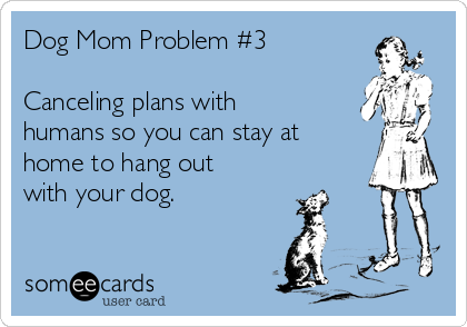 Dog Mom Problem 3 Canceling Plans With Humans So You Can Stay At Home To Hang Out With Your Dog Dog Mom Crazy Dog Lady Dog Quotes