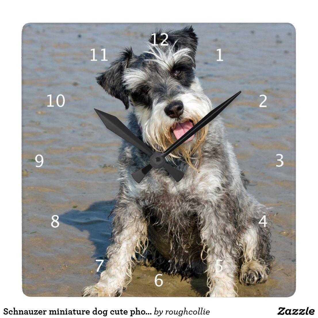 Schnauzer Miniature Dog Cute Photo At Beach Gift Square Wall Clock Zazzle Ca Miniature Dogs Dog Photos Dogs