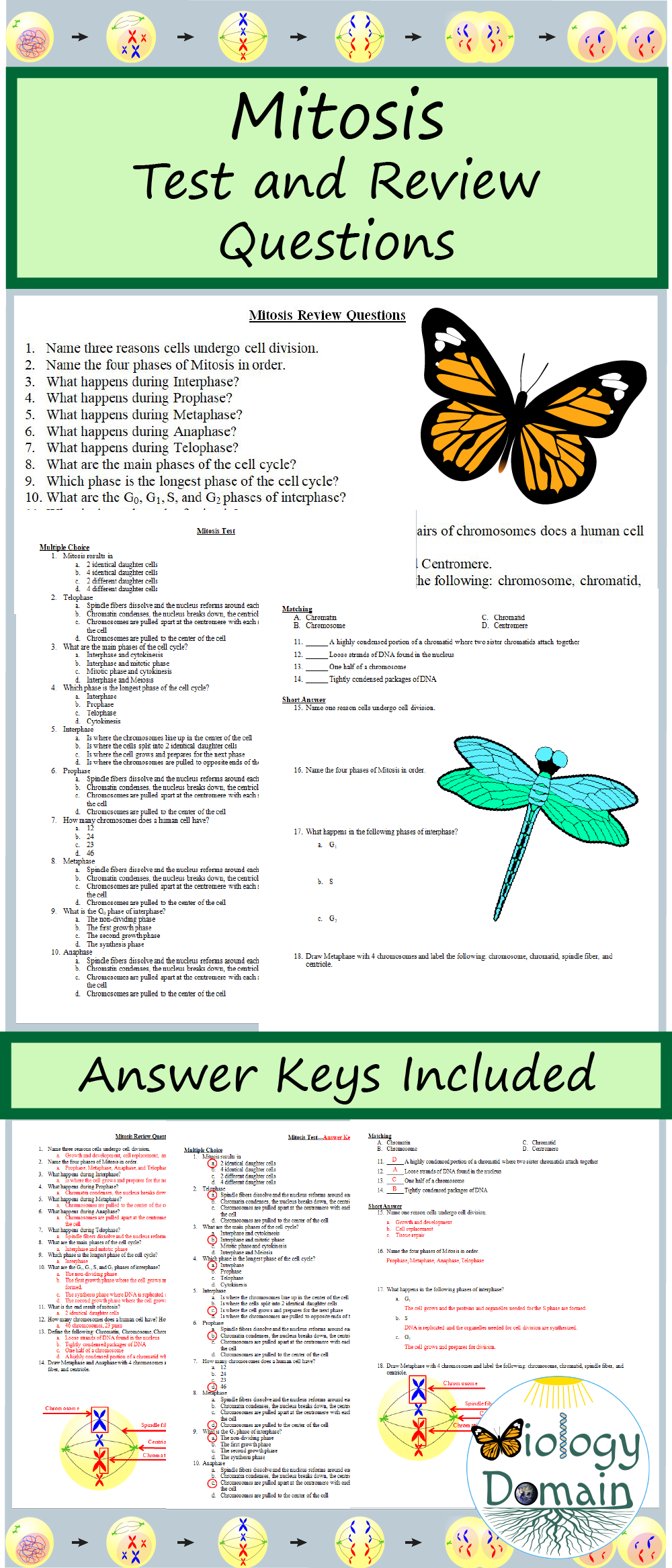 Mitosis Meiosis, Question And Answer, Genetics, Biology, Teacher Pay  Teachers, Division