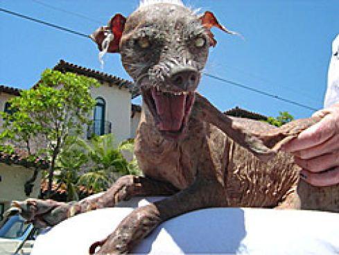 """Legende: Der hässlichste Hund der Unterwelt ragen zum """"Der Hässlichste Hund der Unterwelt""""  Wie findet Sam's Besitzerin Hässlichkeit?  Wie viele Jahre war Sam als er gestorben ist?  Welchen Wettbewerb hat Sam gewonnen?"""
