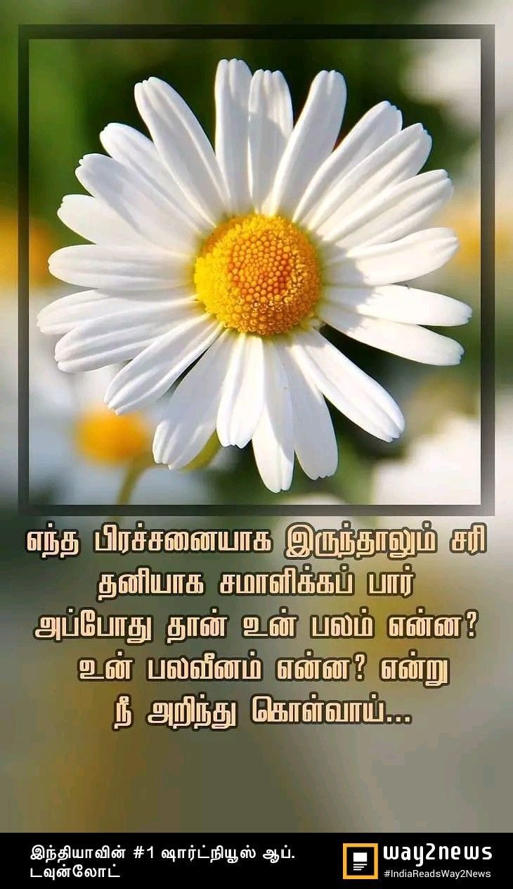 Pin by Lavanya on A Tamil quotes Plants, Girly, Quotes