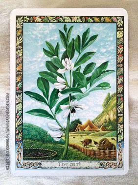L Oracle Druidique Des Plantes De Philip Et Stephanie Carr Gomm Druidique Plante Tarot Carte