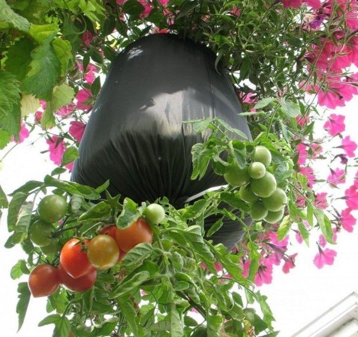 comment faire pousser des tomates dans des bouteilles en. Black Bedroom Furniture Sets. Home Design Ideas