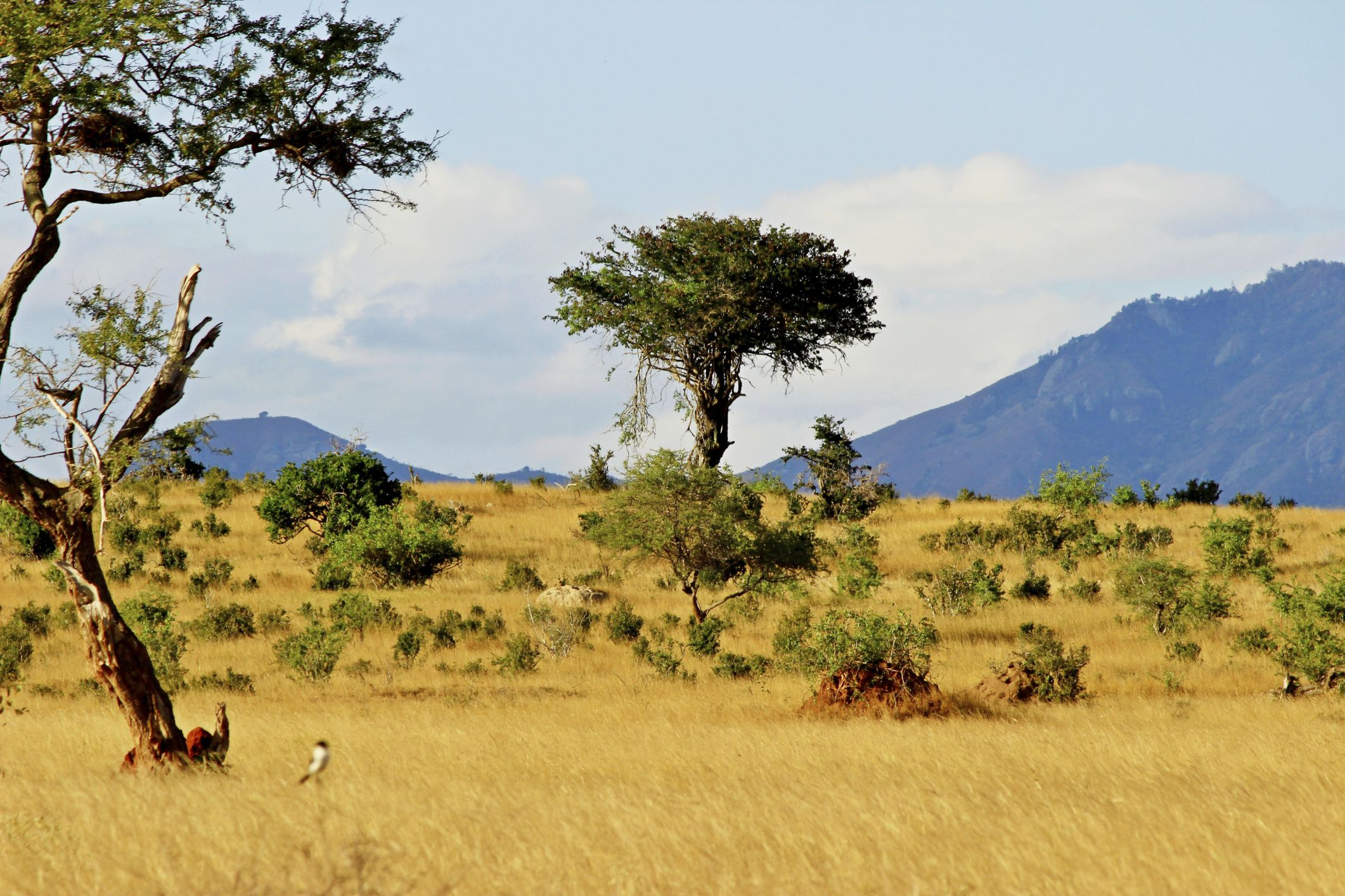 Types of Trees, Grass & Shrubs in the Savanna in 2020