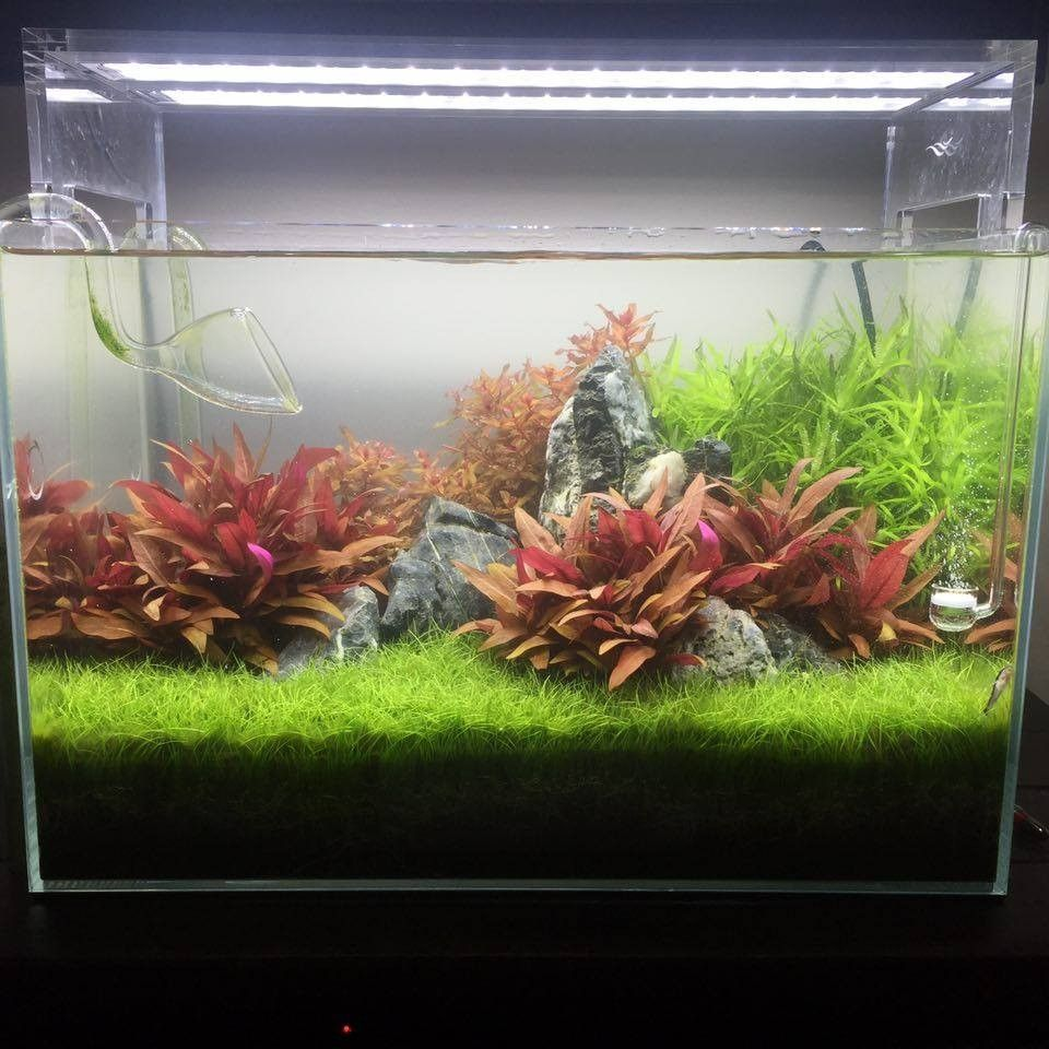 Lovely Planted Tank Mini Lush By Danny Adams   Aquascape Awards