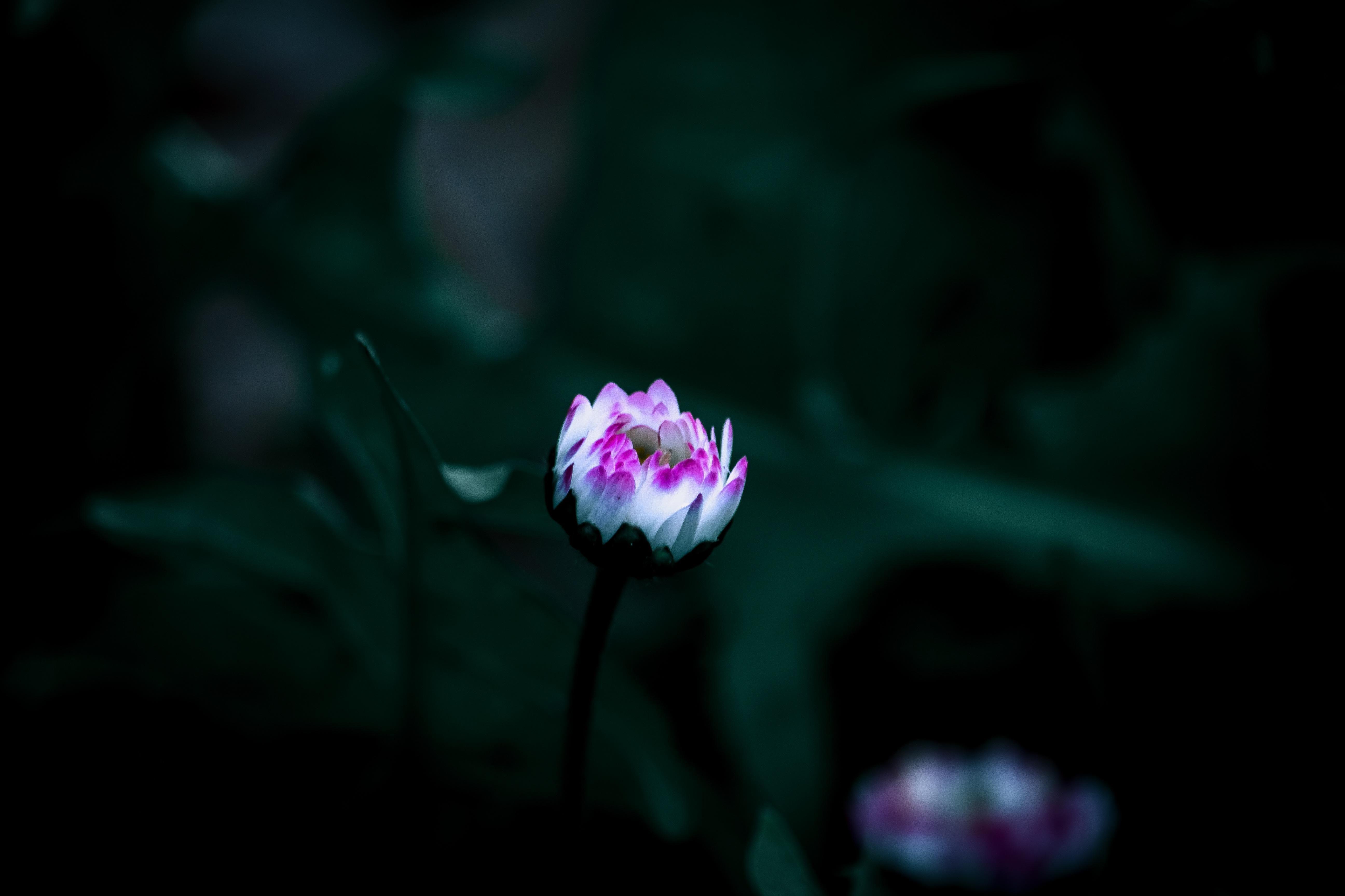 Gambar Bunga Mekar Bergerak